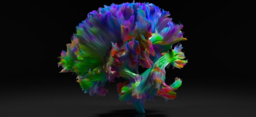 Brain - Connectome project